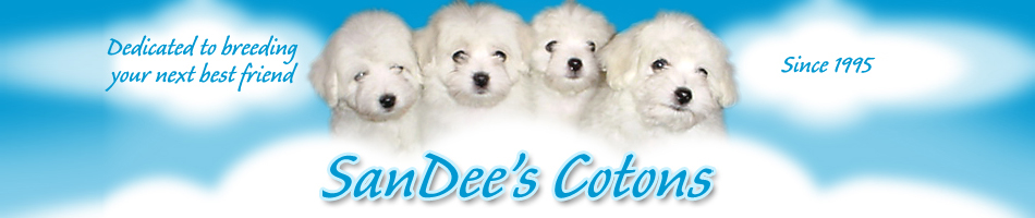 Coton de Tulear Puppies For Sale by a Coton de Tulear Breeder | SanDee's Cotons - Dedicated to Breeding Your Next Best Friend!