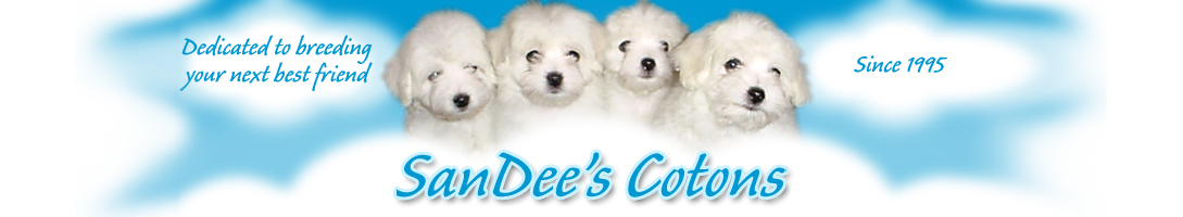 SanDee's Cotons News | Coton de Tulear Puppies For Sale by a Coton de Tulear Breeder